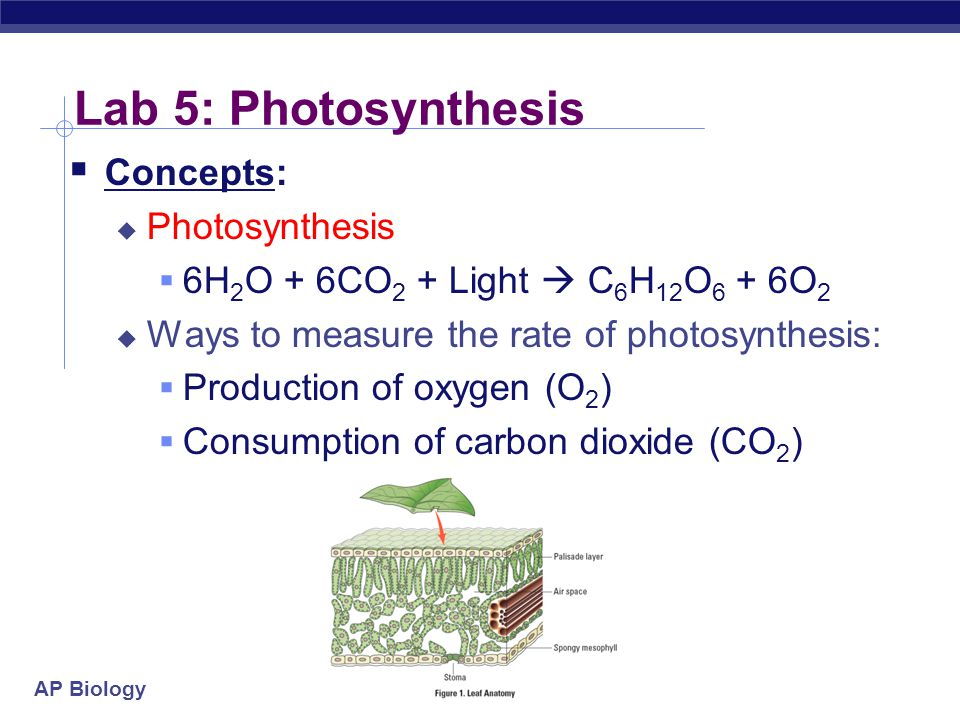 ap biology lab four plant pigments and photosynthesis Watch ap biology lab 4- plant pigments and photosynthesis by  dm_52415cd7b1b71 on dailymotion here.