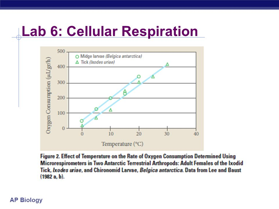 lab 6 cellular respiration Lab 8: respiration learning objectives practice safe laboratory techniques and recognize potential hazards describe the experimental observations that support the occurrence of anaerobic and aerobic respiration.