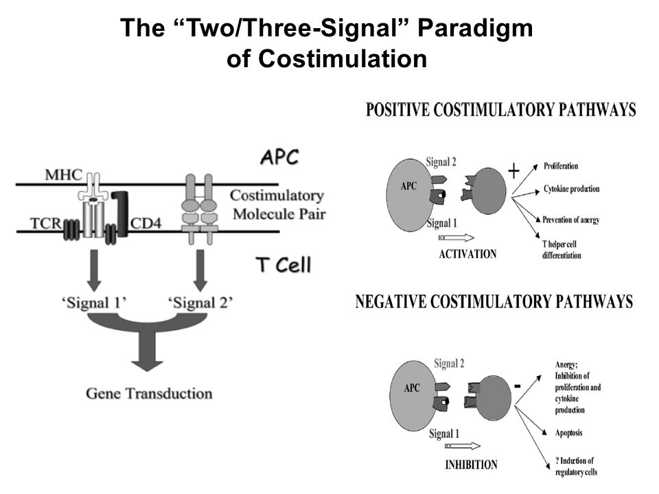 The Two/Three-Signal Paradigm