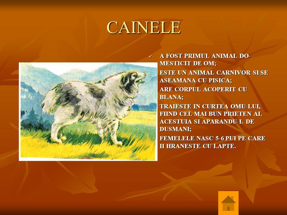 CAINELE A FOST PRIMUL ANIMAL DO-MESTICIT DE OM;
