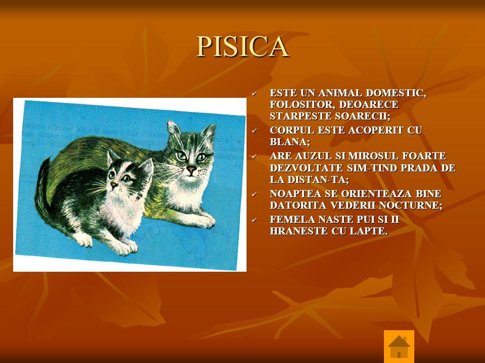 PISICA ESTE UN ANIMAL DOMESTIC, FOLOSITOR, DEOARECE STARPESTE SOARECII; CORPUL ESTE ACOPERIT CU BLANA;