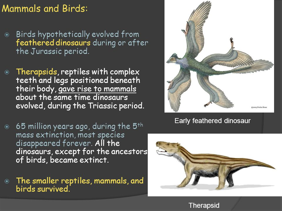 what are therapsids and is their relationship to mammals