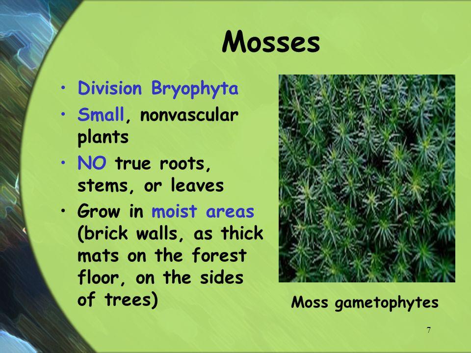 Nonvascular Amp Simple Vascular Plants Ppt Video Online