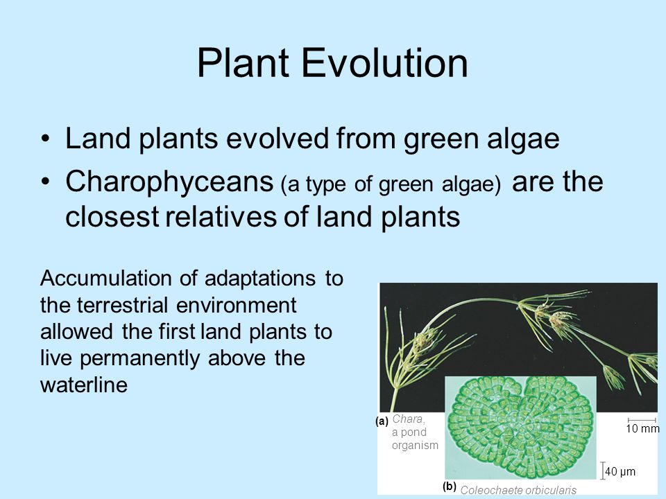 Plant  Wikipedia
