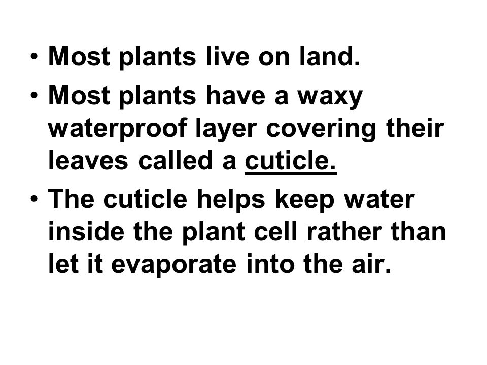Most plants live on land.