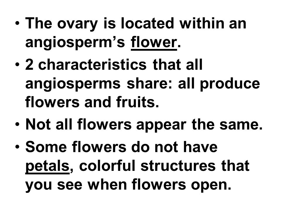 The ovary is located within an angiosperm's flower.