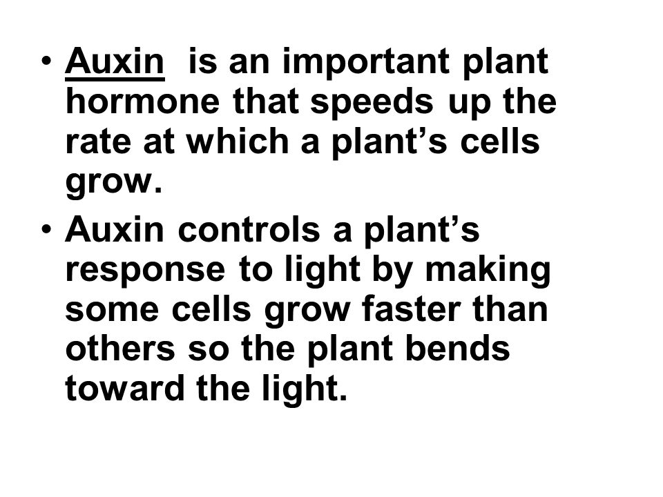 Auxin is an important plant hormone that speeds up the rate at which a plant's cells grow.