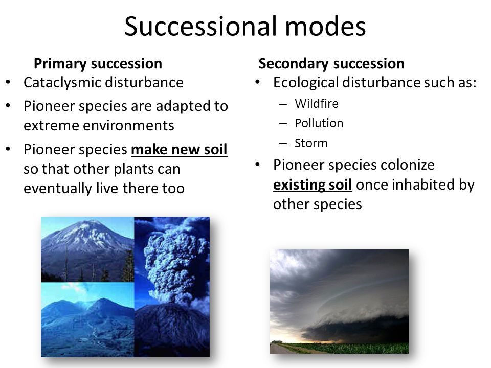 Successional+modes+Primary+succession+Secondary+succession primary and secondary succession venn diagram elita mydearest co
