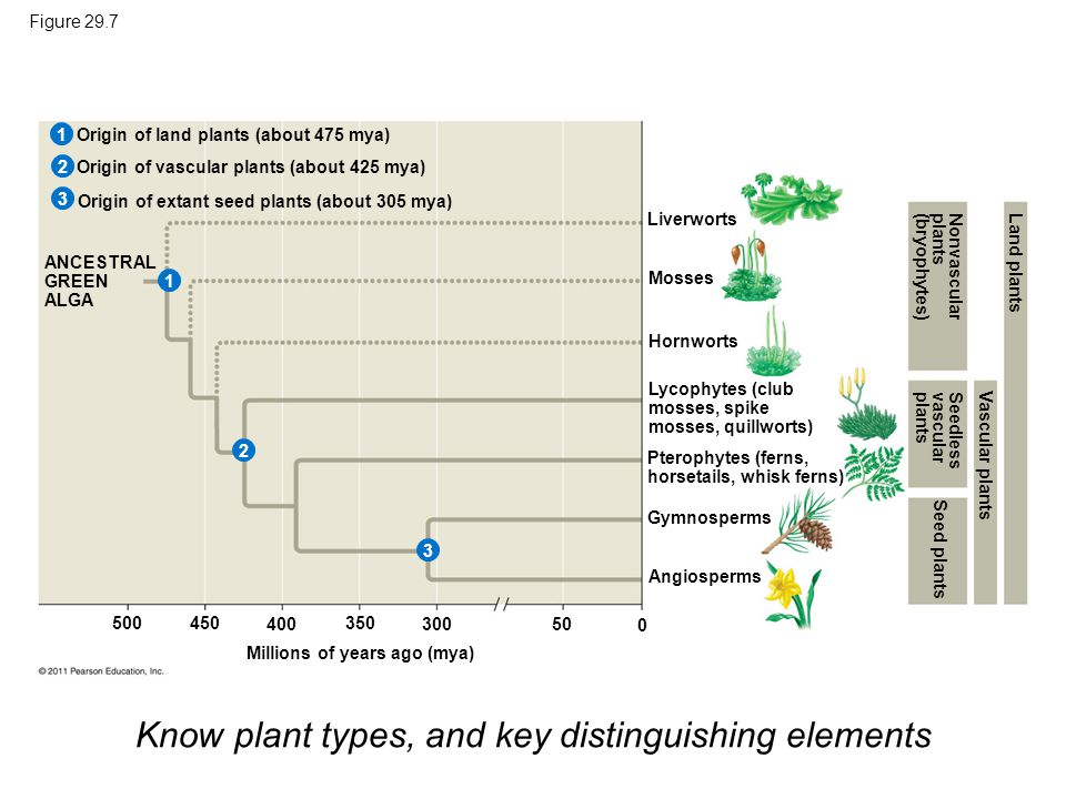 Know plant types, and key distinguishing elements