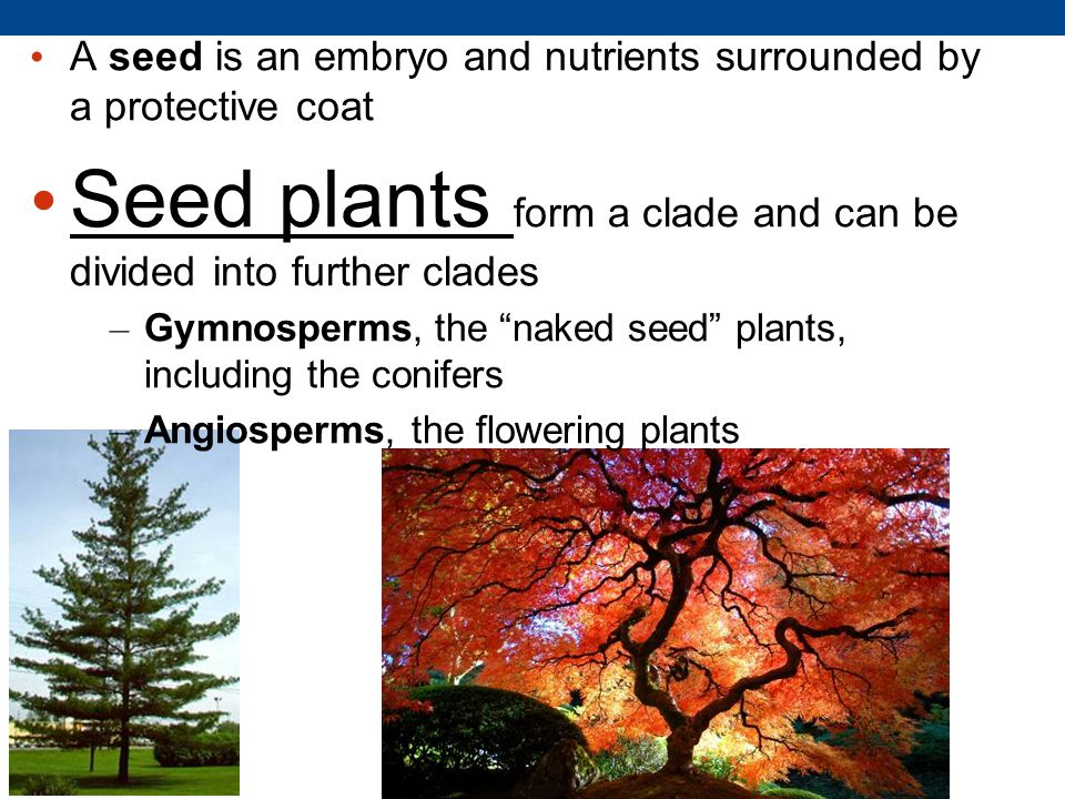 Seed plants form a clade and can be divided into further clades