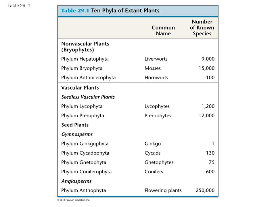 Table Table 29.1 Ten Phyla of Extant Plants 1 m