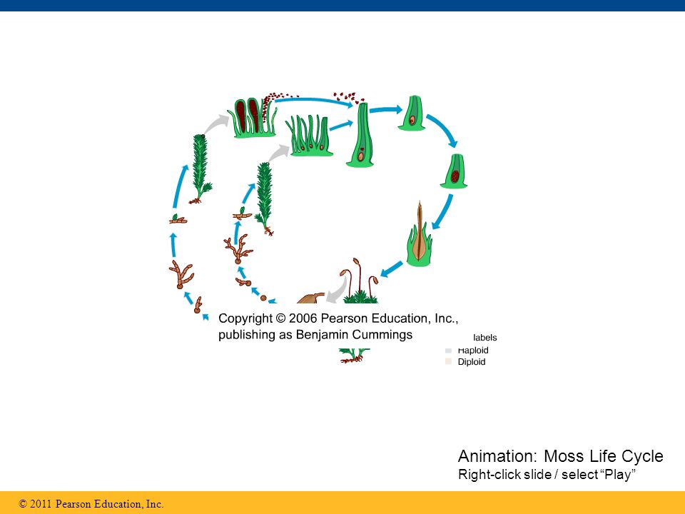 Animation: Moss Life Cycle Right-click slide / select Play