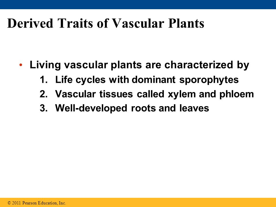 Derived Traits of Vascular Plants
