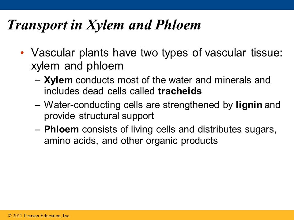 Transport in Xylem and Phloem