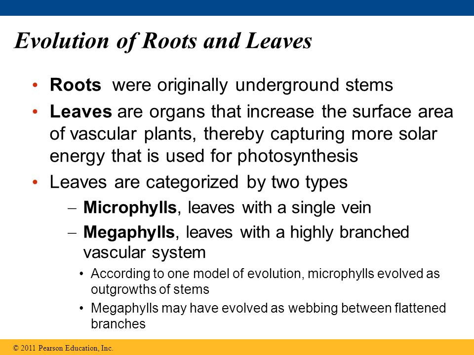 Evolution of Roots and Leaves