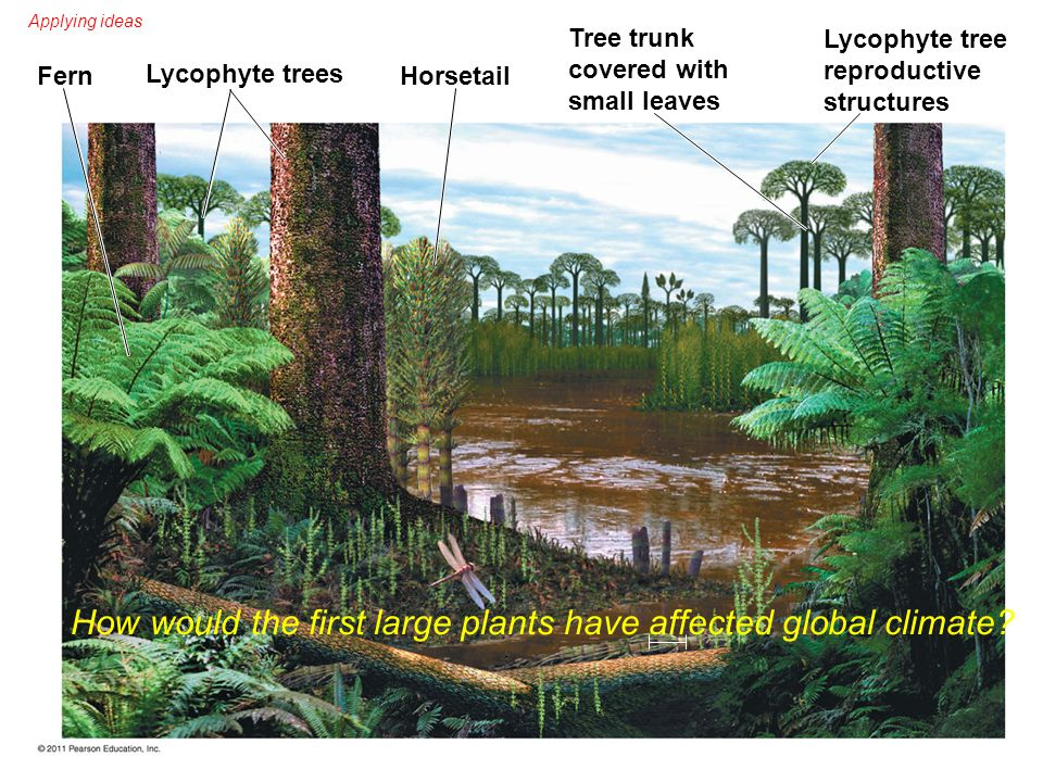 How would the first large plants have affected global climate