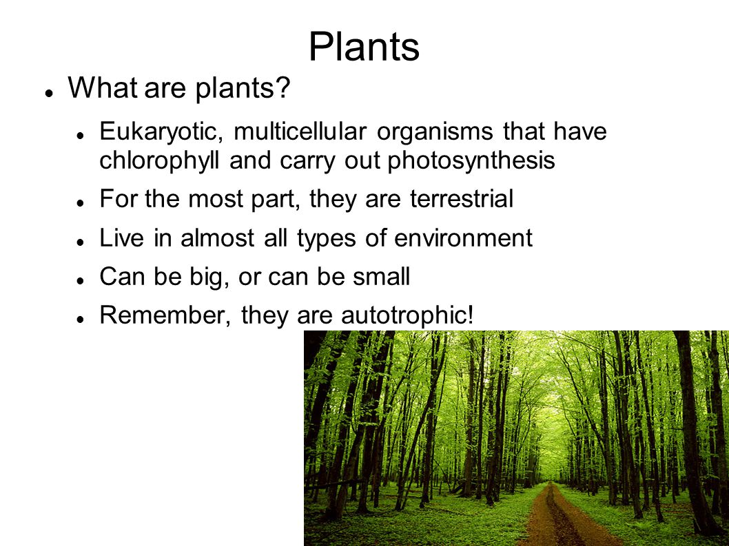 Plants What are plants Eukaryotic, multicellular organisms that have chlorophyll and carry out photosynthesis.