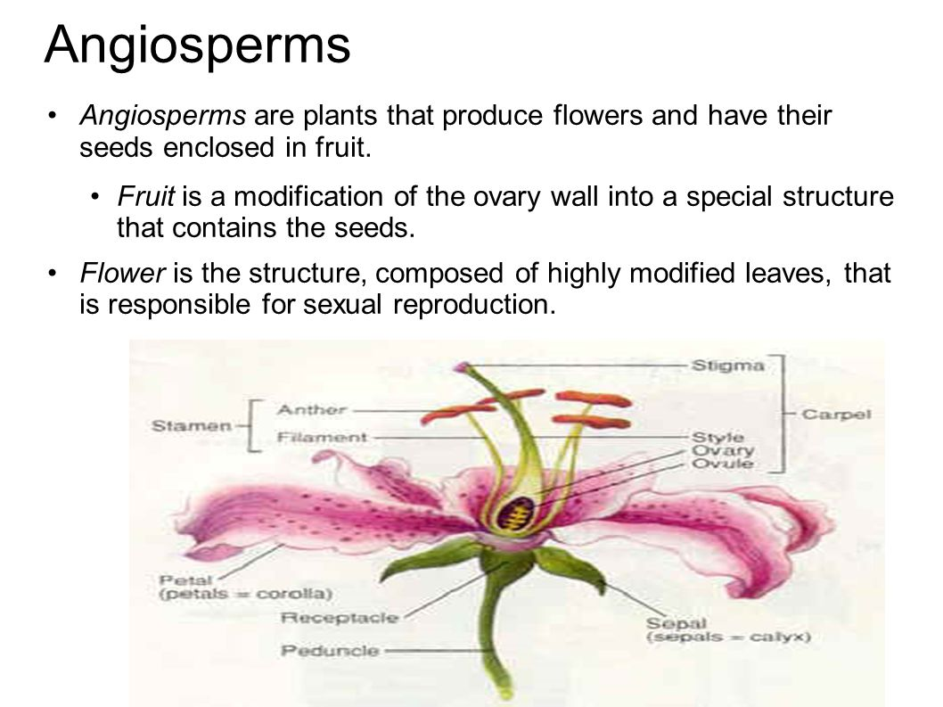 Angiosperms Angiosperms are plants that produce flowers and have their seeds enclosed in fruit.