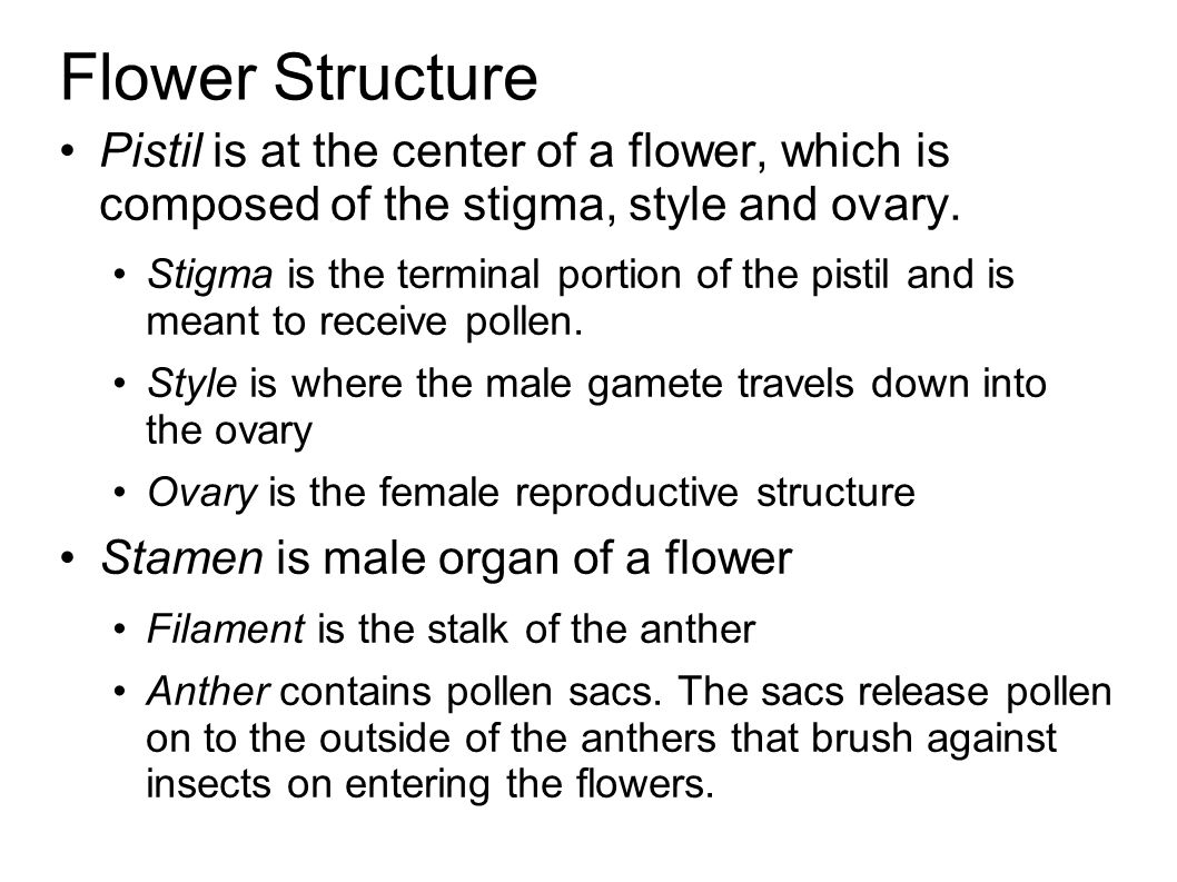 Flower Structure Pistil is at the center of a flower, which is composed of the stigma, style and ovary.