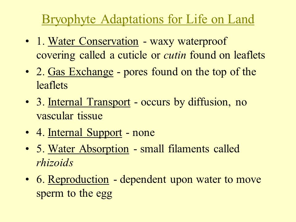 Bryophyte Adaptations for Life on Land