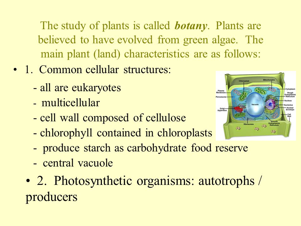 2. Photosynthetic organisms: autotrophs / producers
