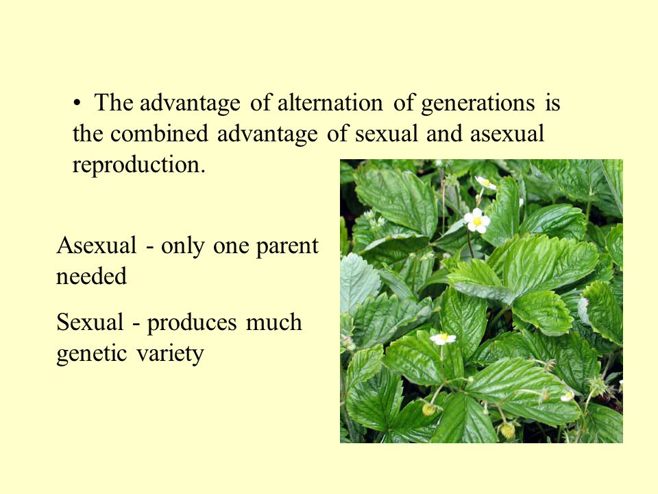 The advantage of alternation of generations is the combined advantage of sexual and asexual reproduction.