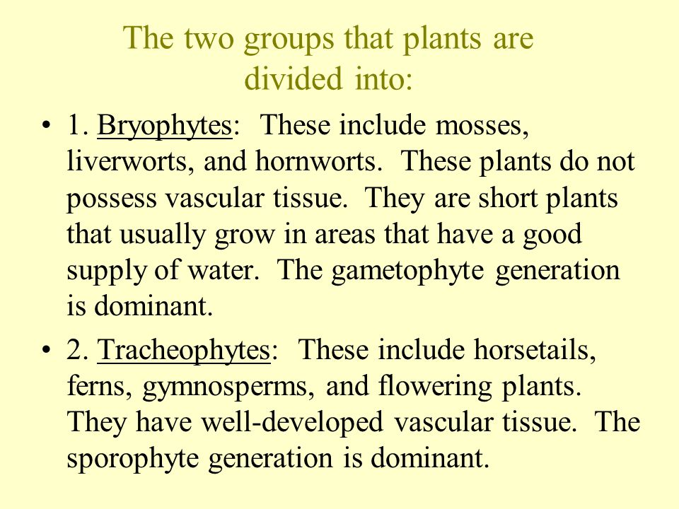 The two groups that plants are divided into: