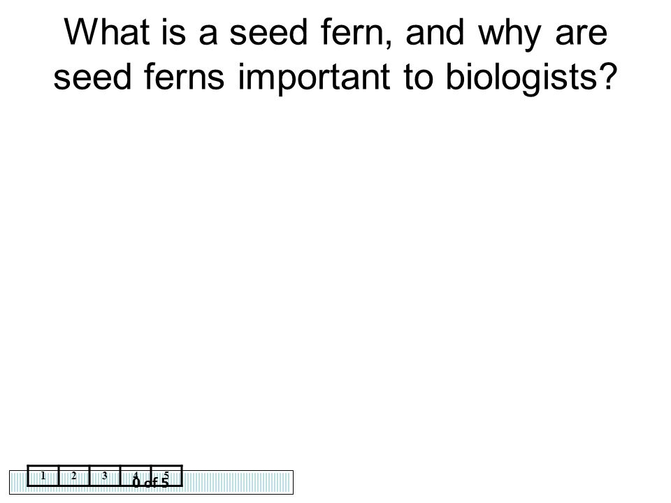 What is a seed fern, and why are seed ferns important to biologists