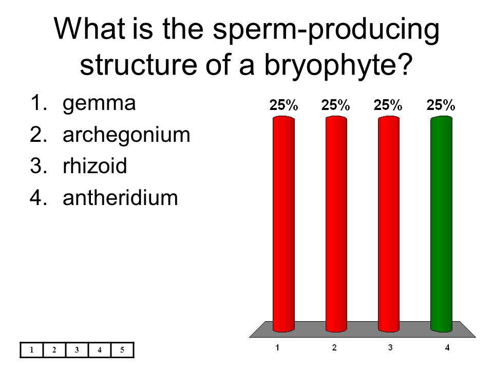 What is the sperm-producing structure of a bryophyte