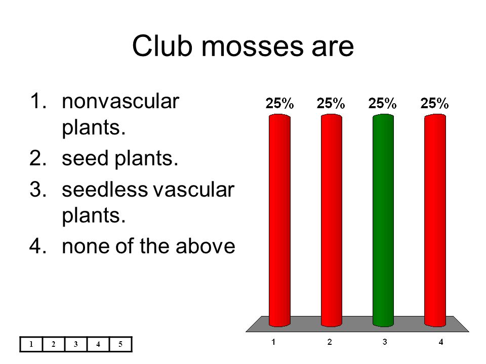 Club mosses are nonvascular plants. seed plants.