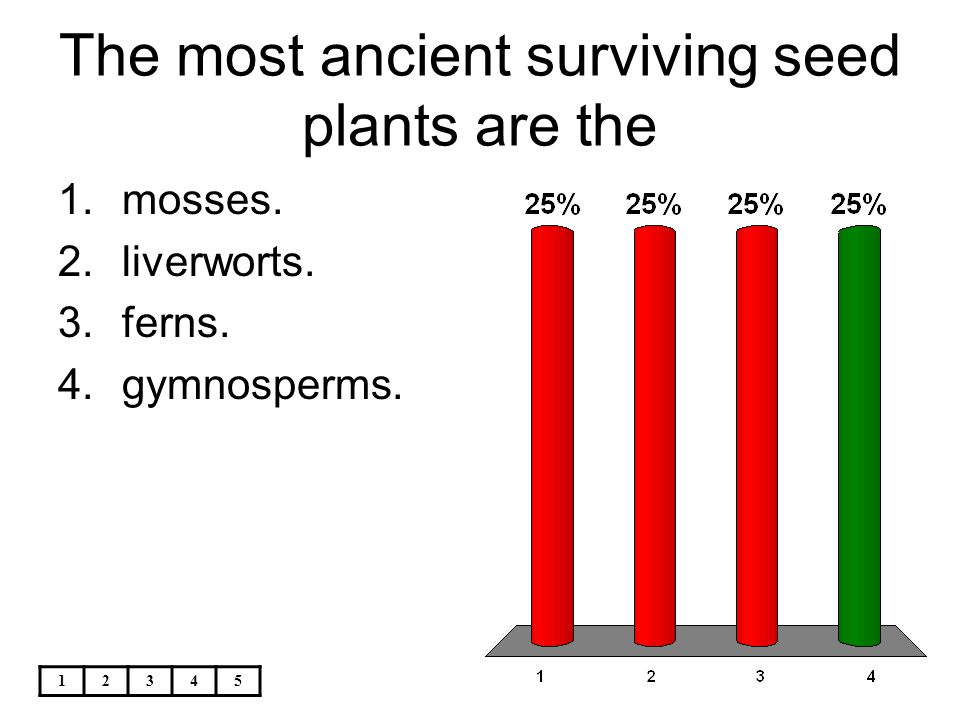 The most ancient surviving seed plants are the