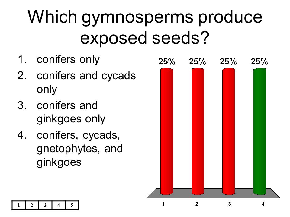 Which gymnosperms produce exposed seeds