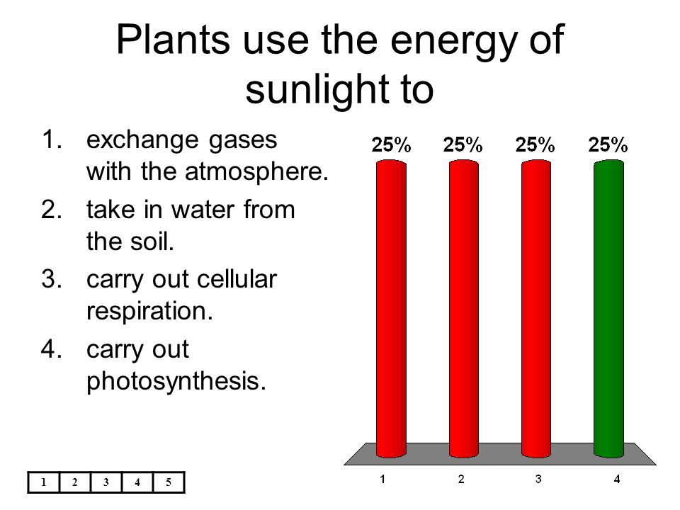 Plants use the energy of sunlight to