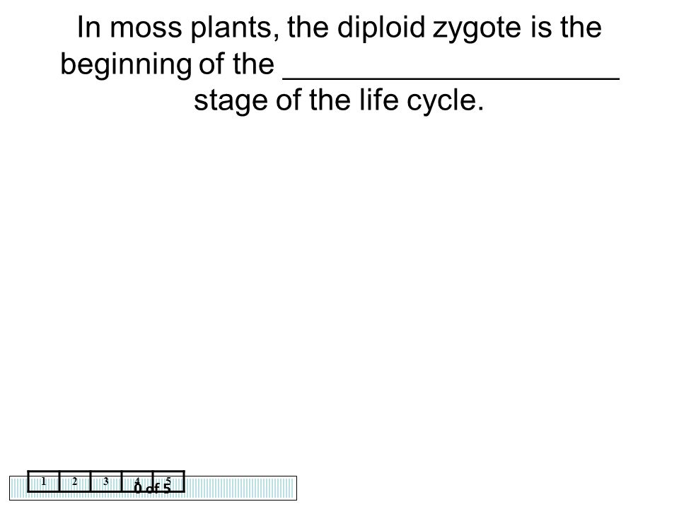 In moss plants, the diploid zygote is the beginning of the ____________________ stage of the life cycle.