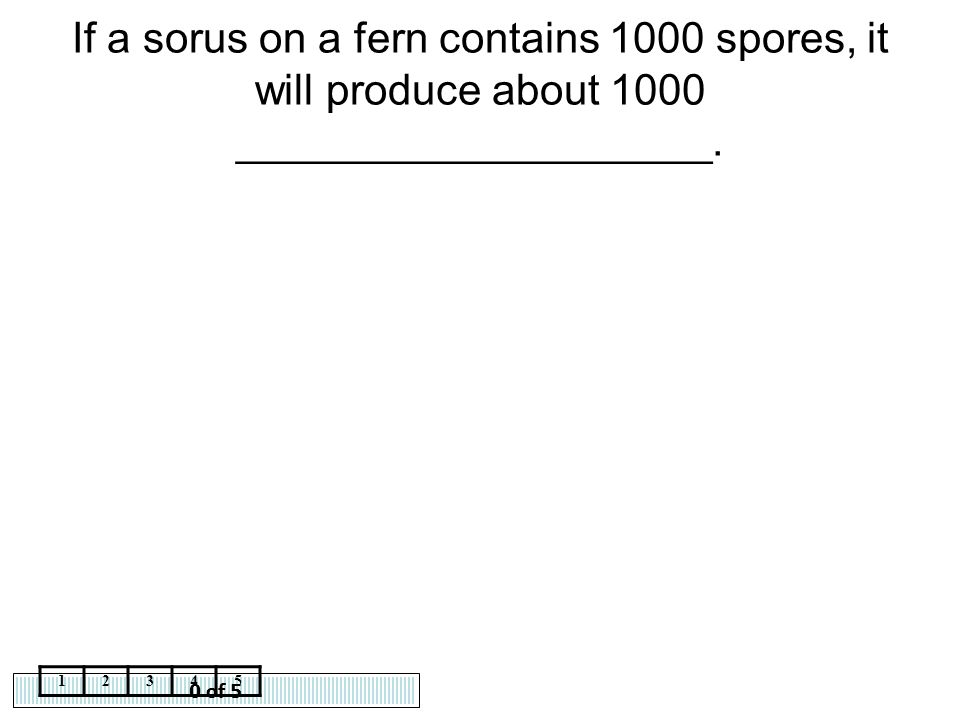 If a sorus on a fern contains 1000 spores, it will produce about 1000 ____________________.