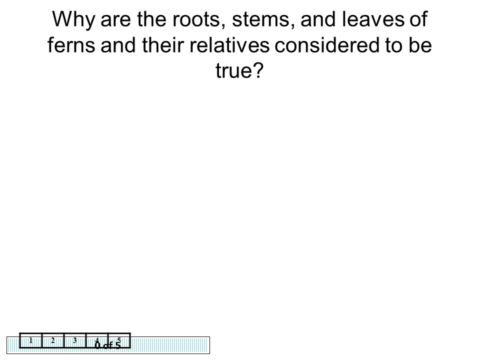 Why are the roots, stems, and leaves of ferns and their relatives considered to be true