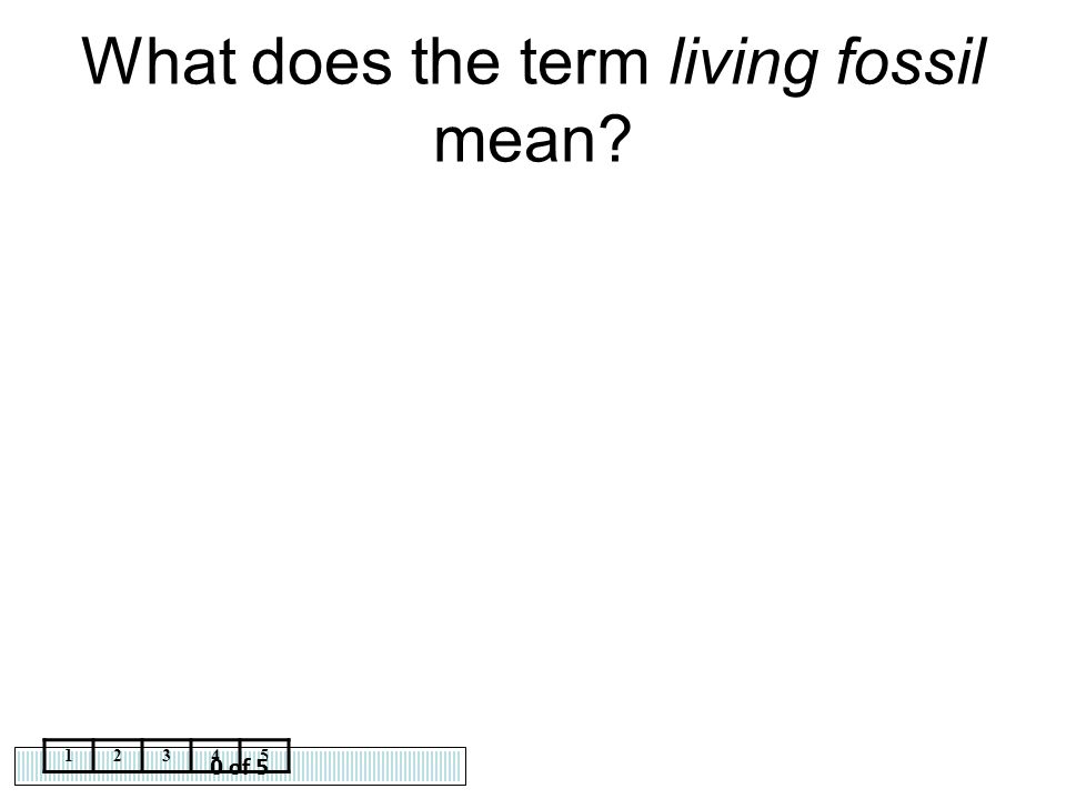 What does the term living fossil mean
