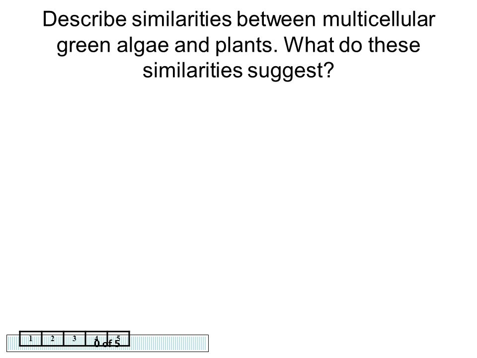 Describe similarities between multicellular green algae and plants