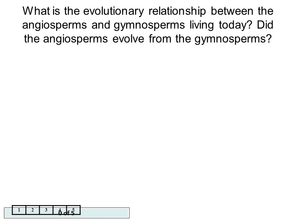 What is the evolutionary relationship between the angiosperms and gymnosperms living today Did the angiosperms evolve from the gymnosperms