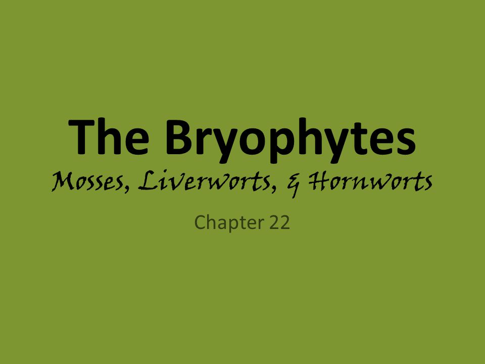The Bryophytes Mosses, Liverworts, & Hornworts