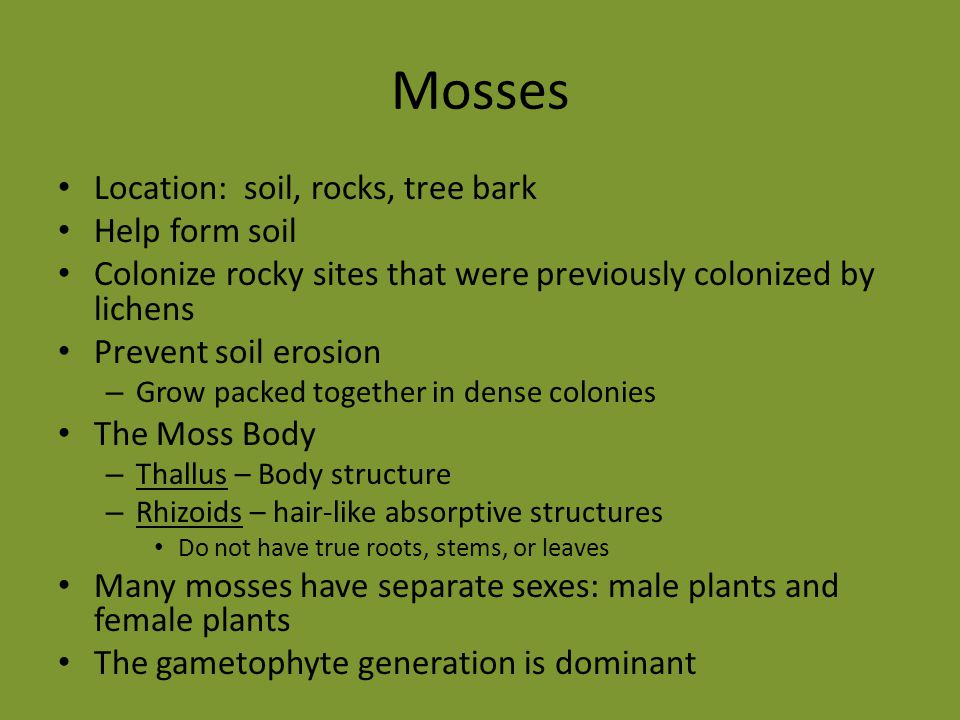 Mosses Location: soil, rocks, tree bark Help form soil