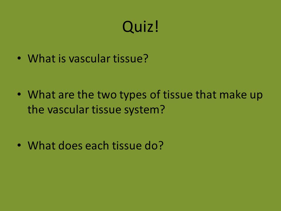 Quiz! What is vascular tissue