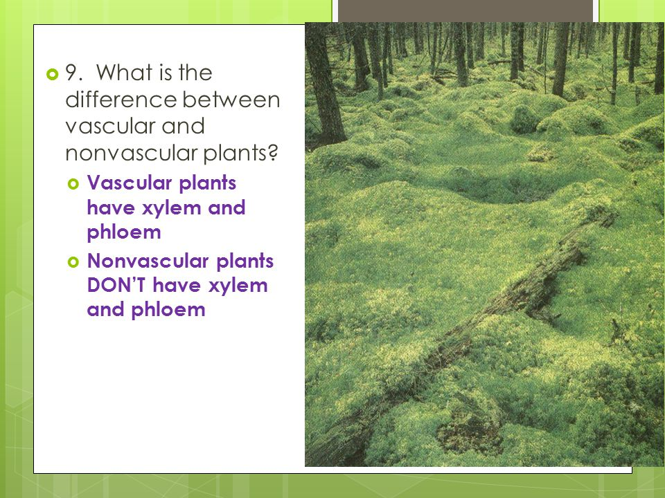 9. What is the difference between vascular and nonvascular plants