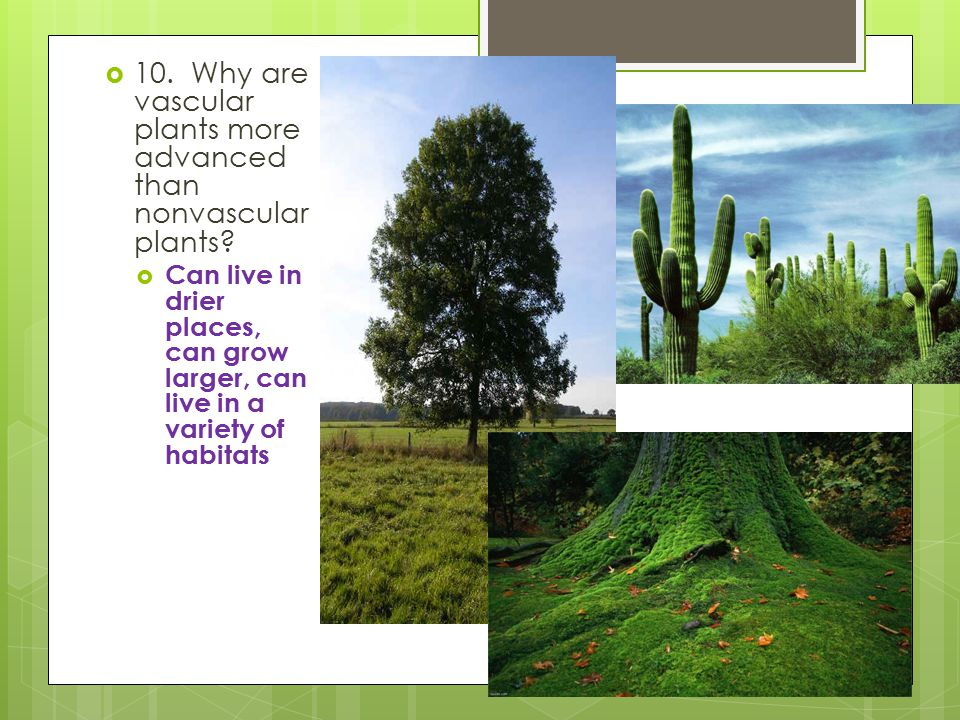 10. Why are vascular plants more advanced than nonvascular plants
