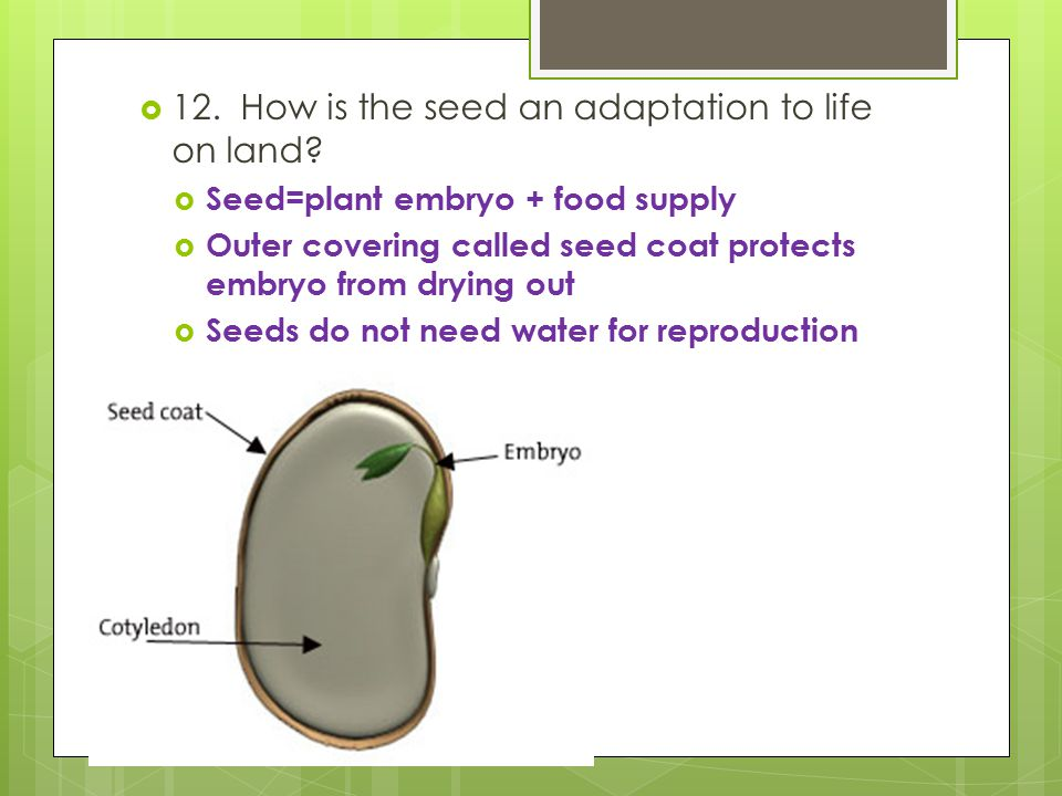 12. How is the seed an adaptation to life on land