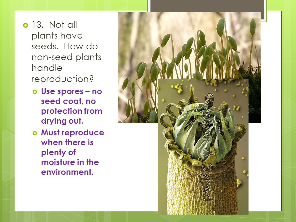 13. Not all plants have seeds
