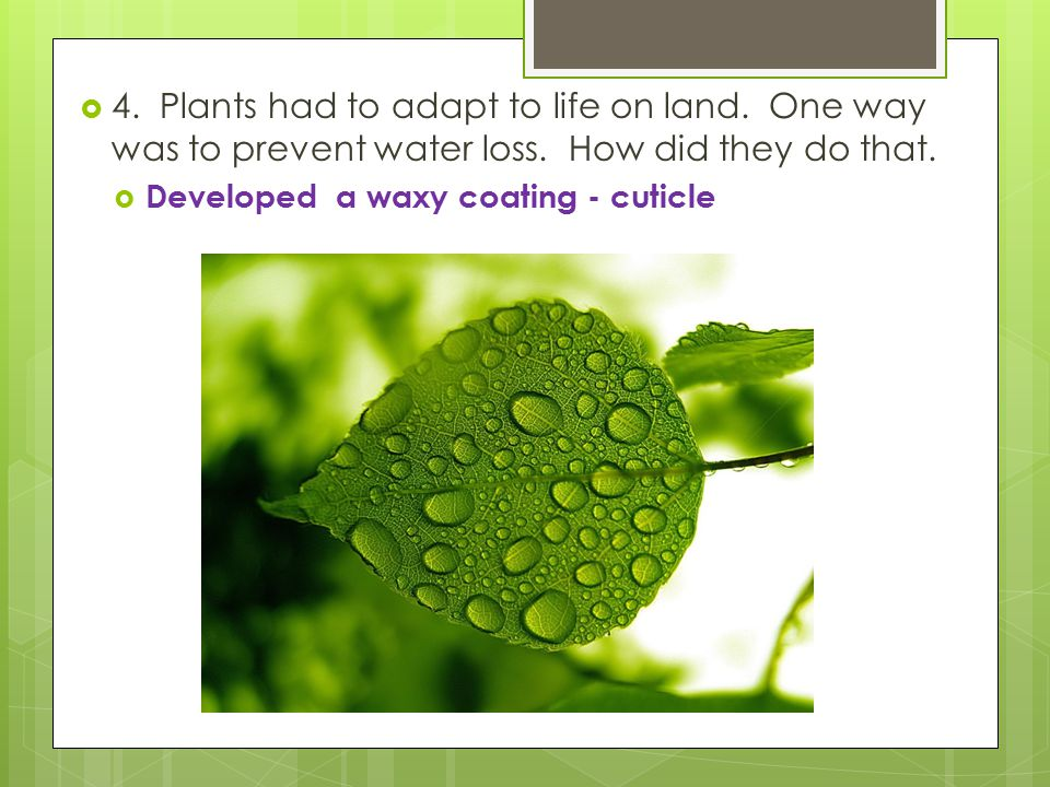 4. Plants had to adapt to life on land