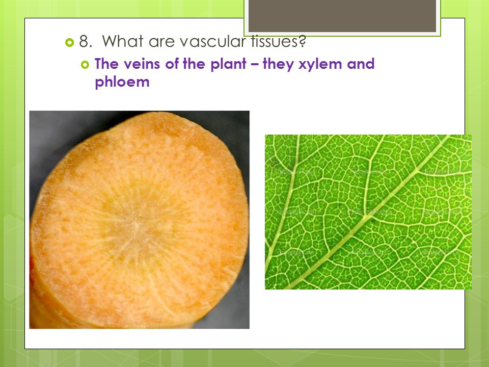 8. What are vascular tissues