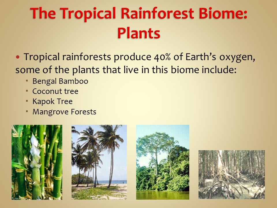 an analysis of the tropical rain forest biome The plant geographer a f w schimper first used the term tropical rain forest in 1898 to characterize the broad-leaved evergreen trees.
