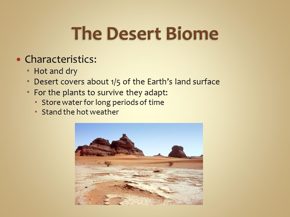 characteristics of the desert Physical features of the sahara desert some geographical features of the sahara are sand dunes, dry valleys, salt flats, and several mountain ranges, some of which are volcanic the sahara has a number of physical features, including ergs, regs, hamadas, and oases.